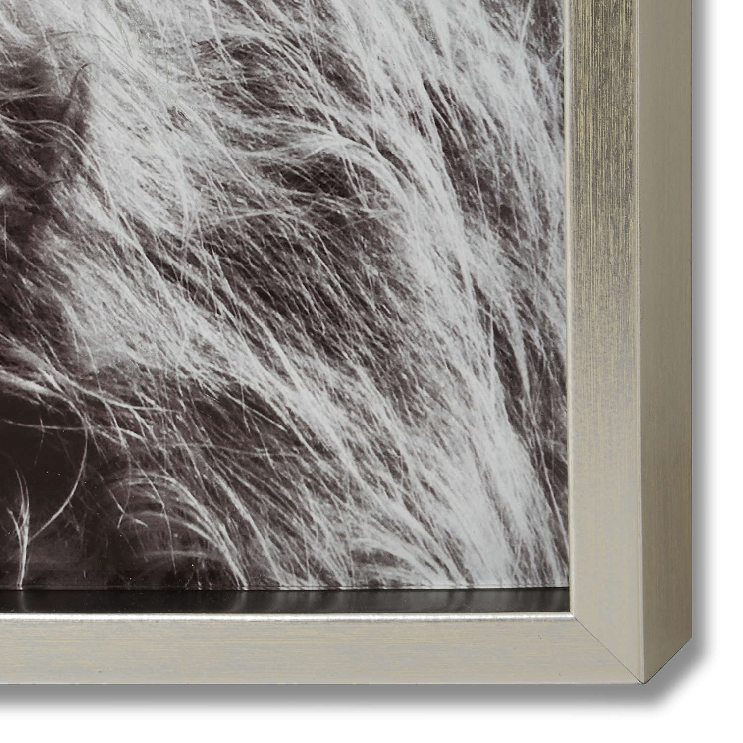 Highland Cow Left Facing Glass Image with Silver Frame - Image 2