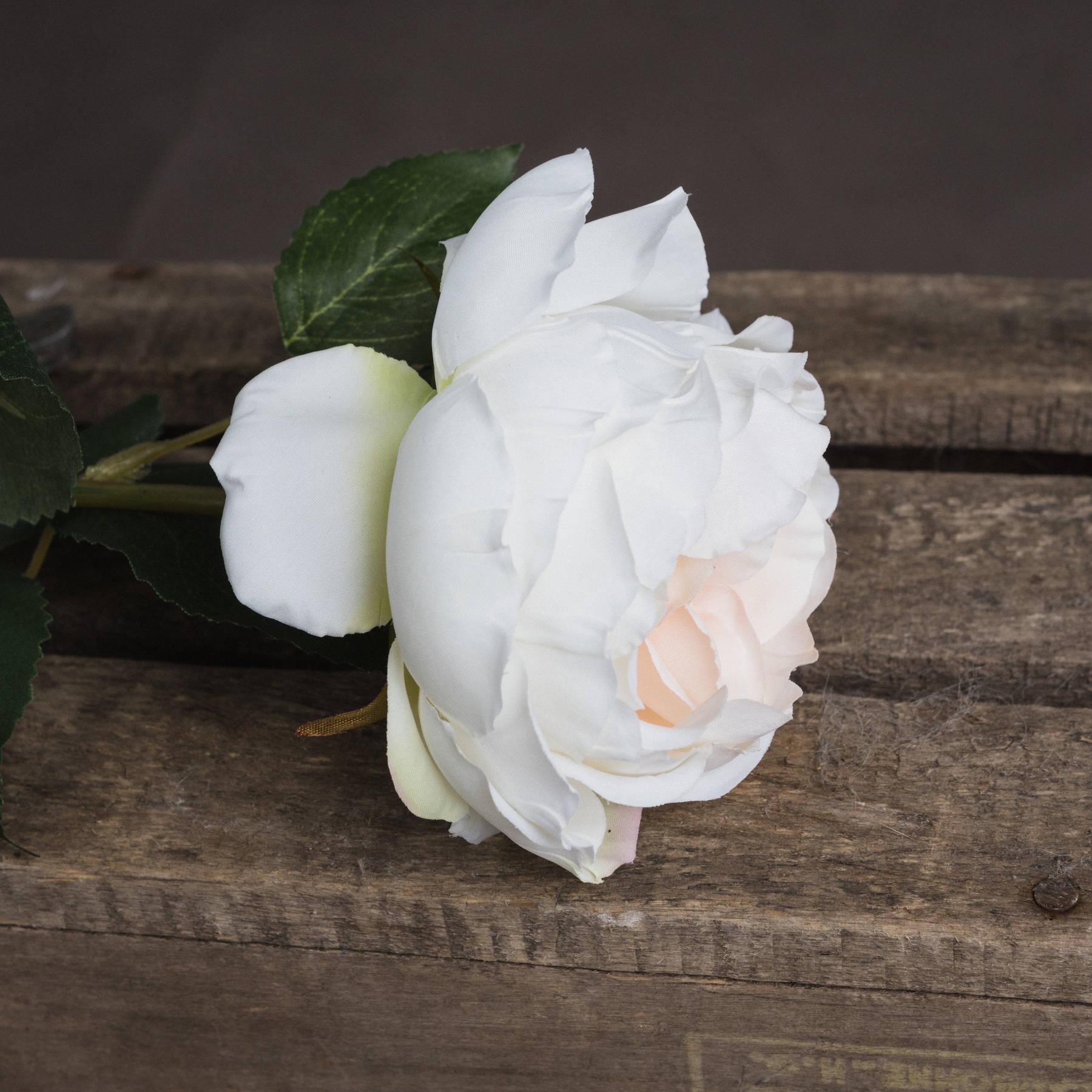 Blush Garden Rose - Image 3