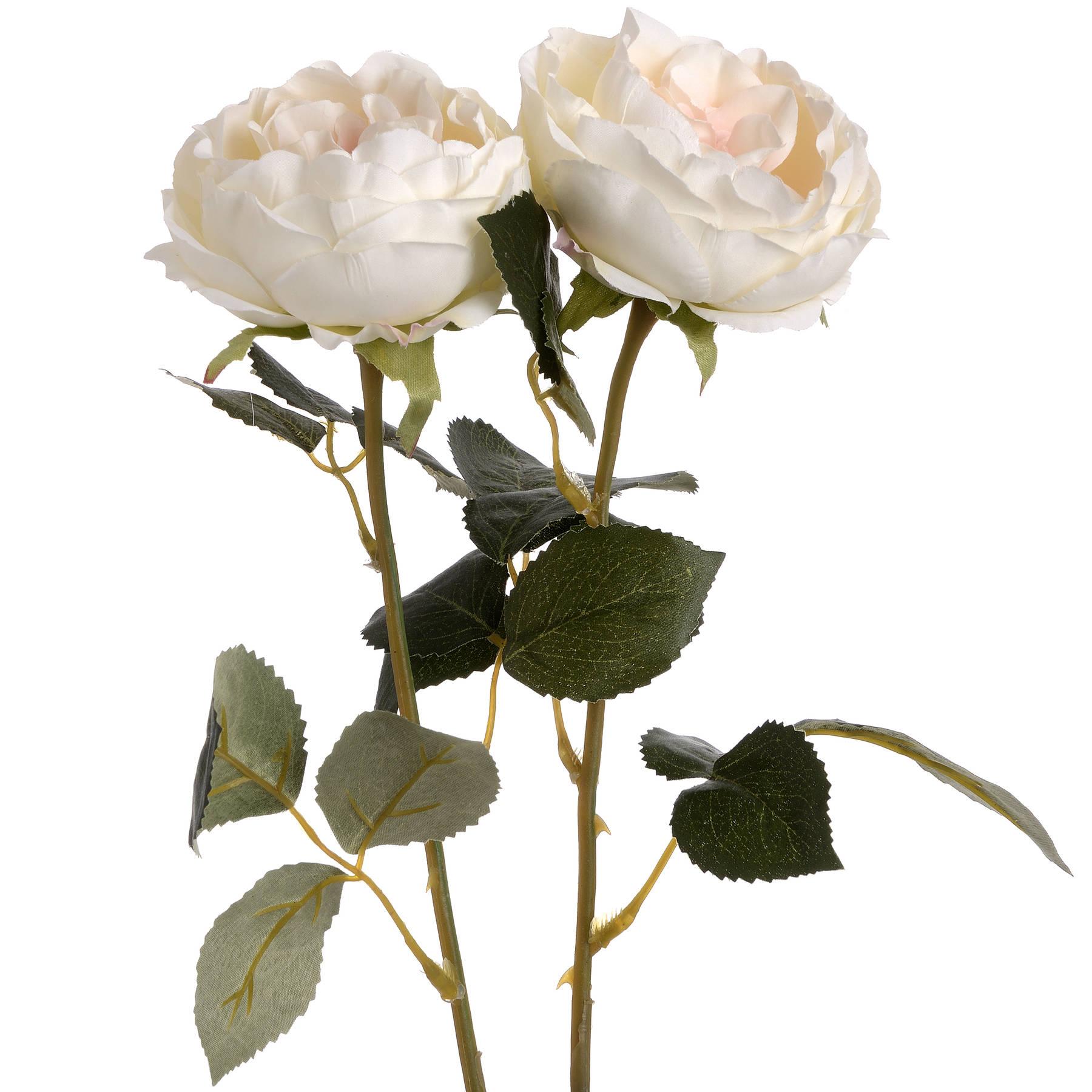 Blush Garden Rose - Image 4