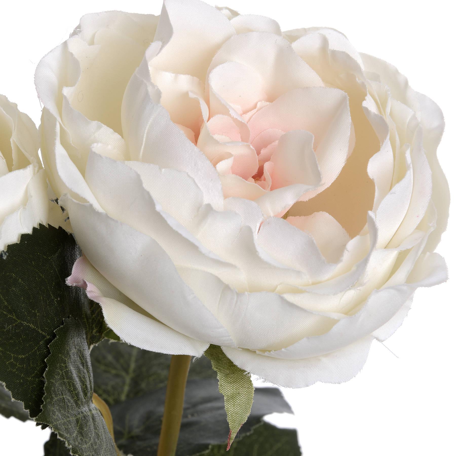 Blush Garden Rose - Image 5