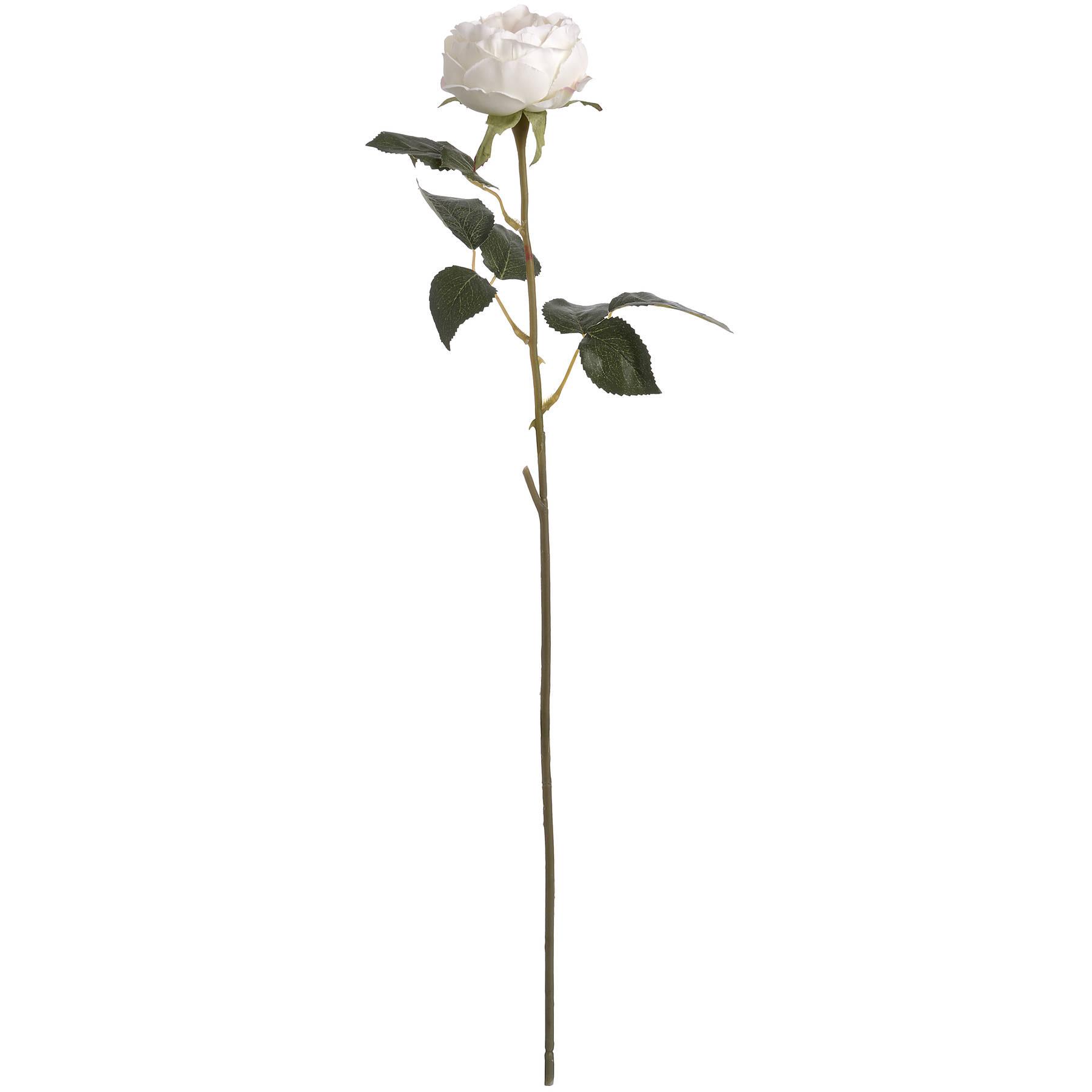 Blush Garden Rose - Image 6