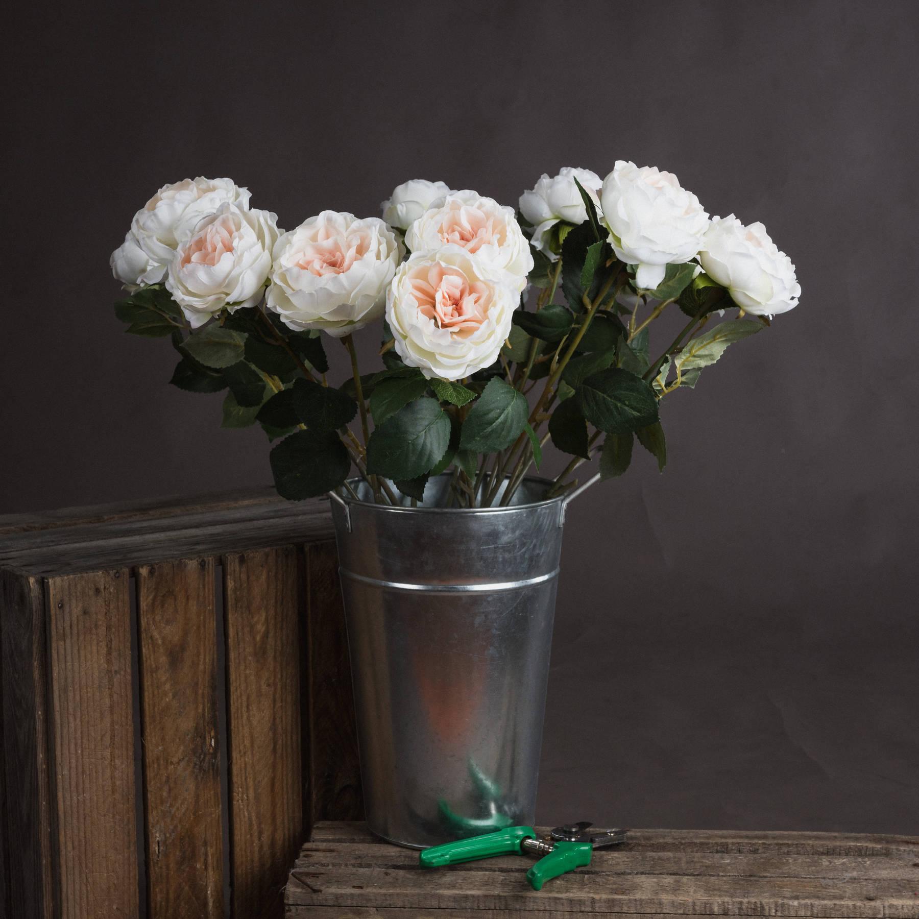 Blush Garden Rose - Image 1