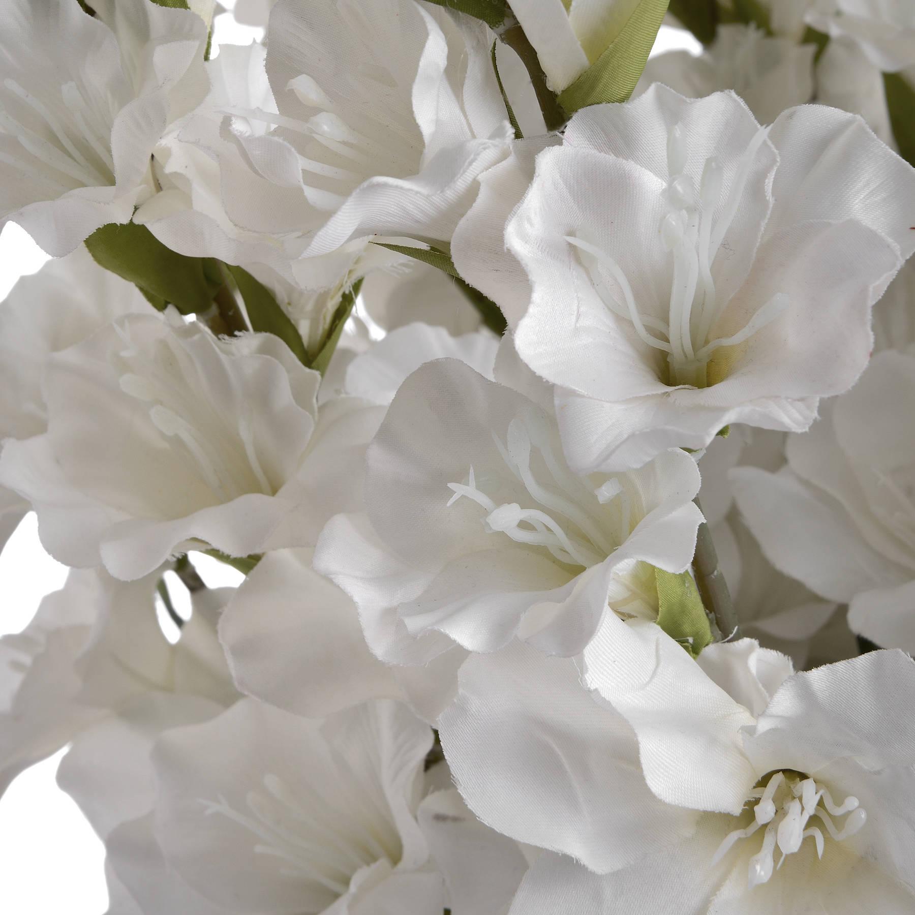 White Gladioli - Image 5