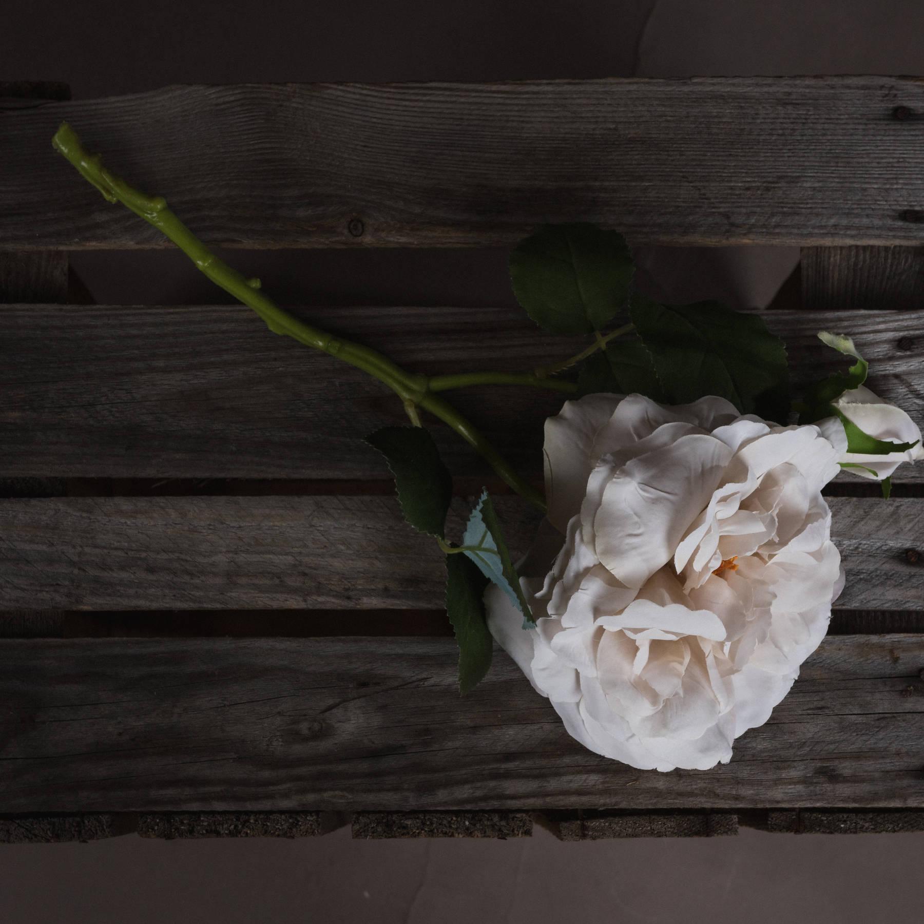 White Short Stem Rose - Image 2