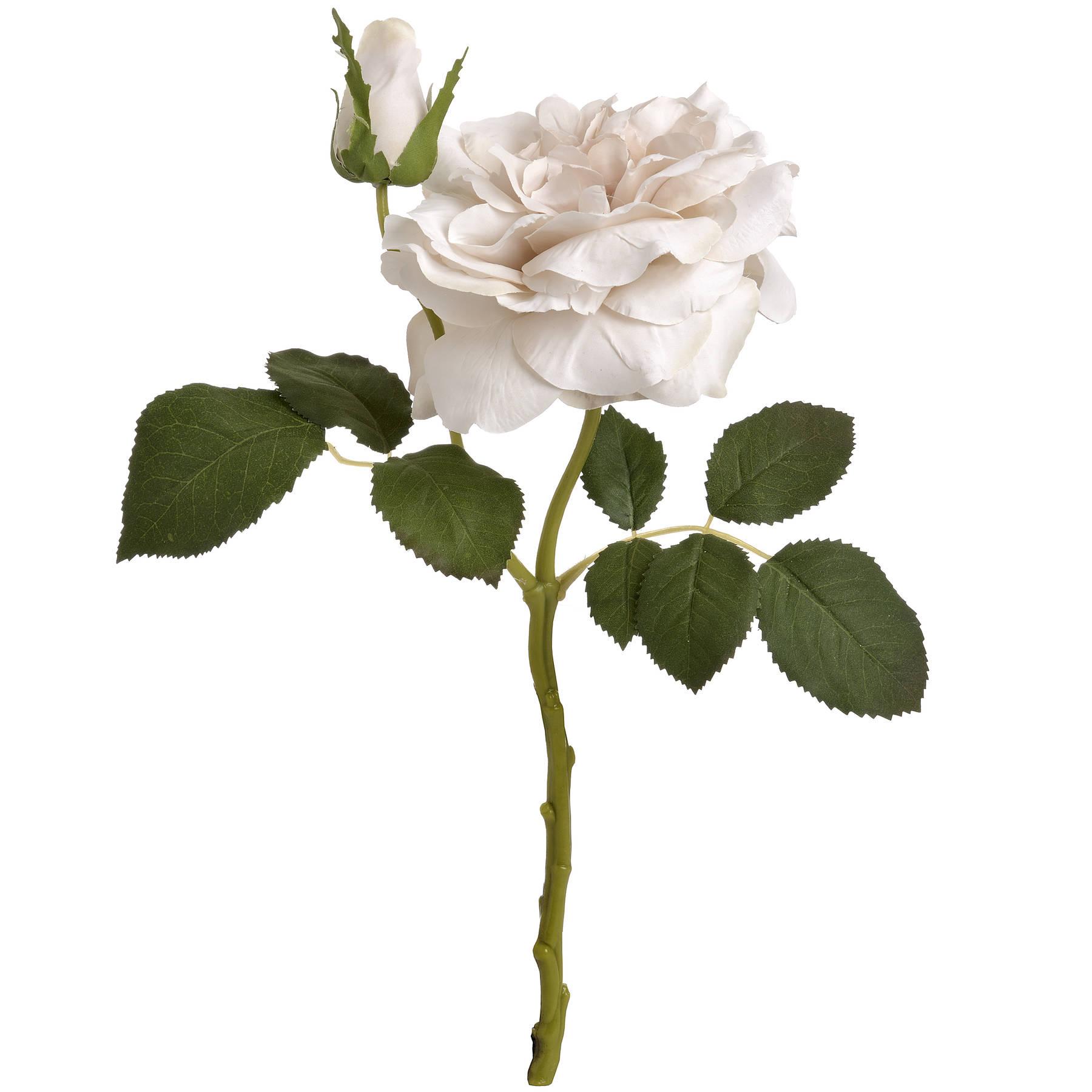 White Short Stem Rose - Image 6