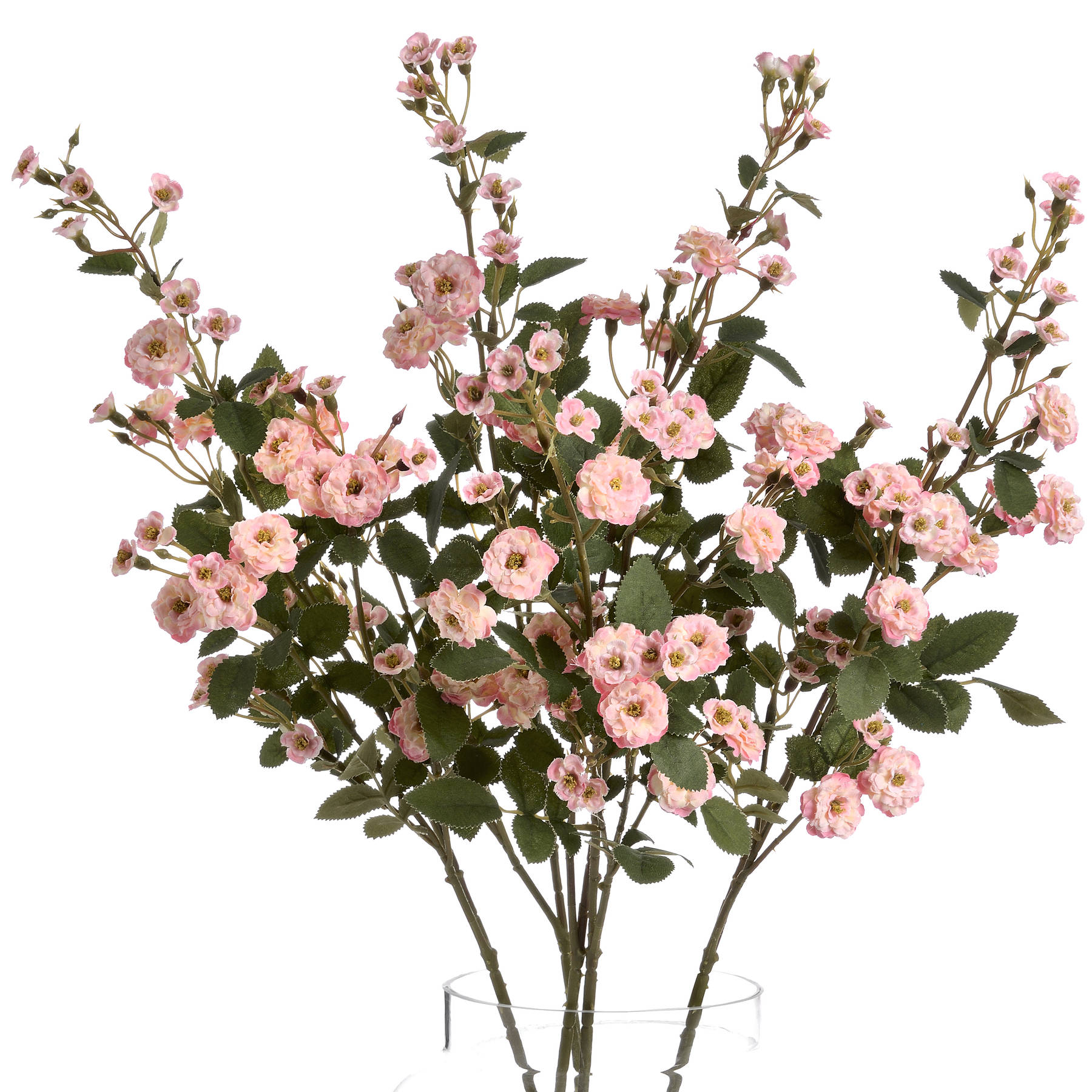 Pink Wild Meadow Rose - Image 4