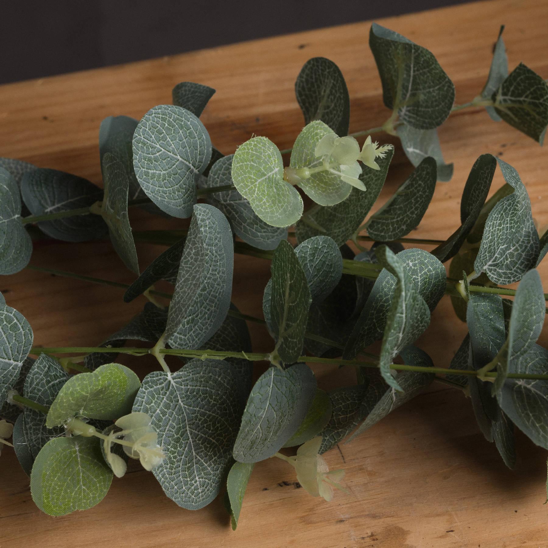 Eucalyptus Spray - Image 3
