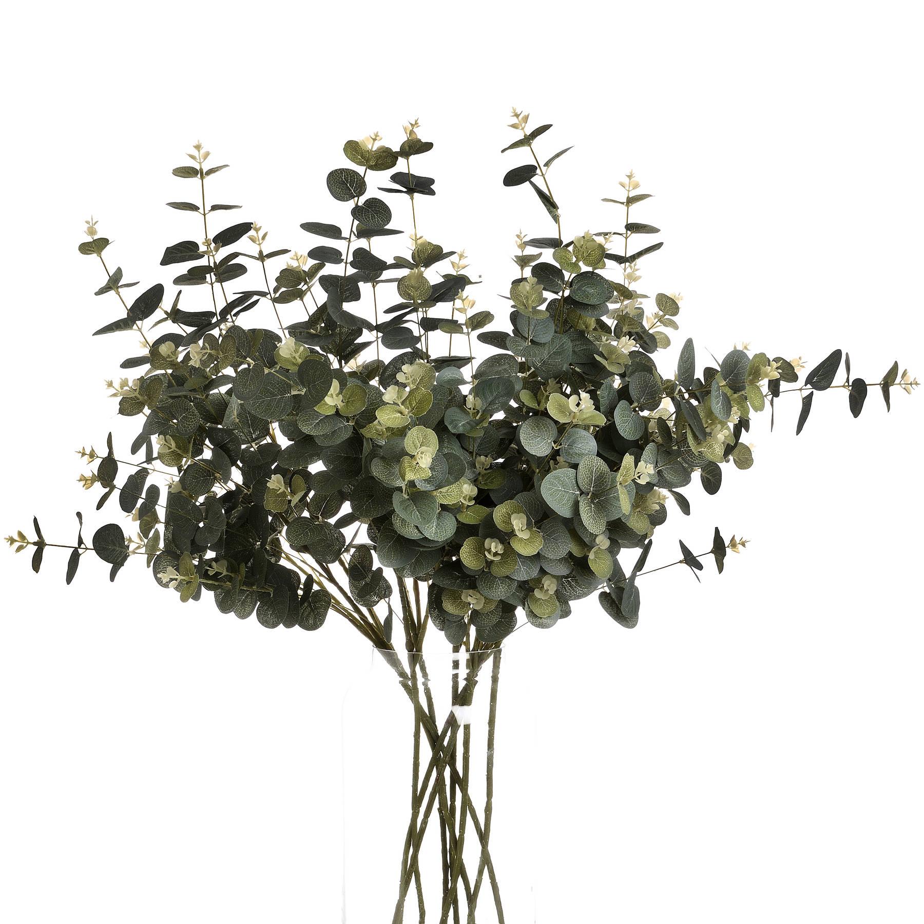 Eucalyptus Spray - Image 4