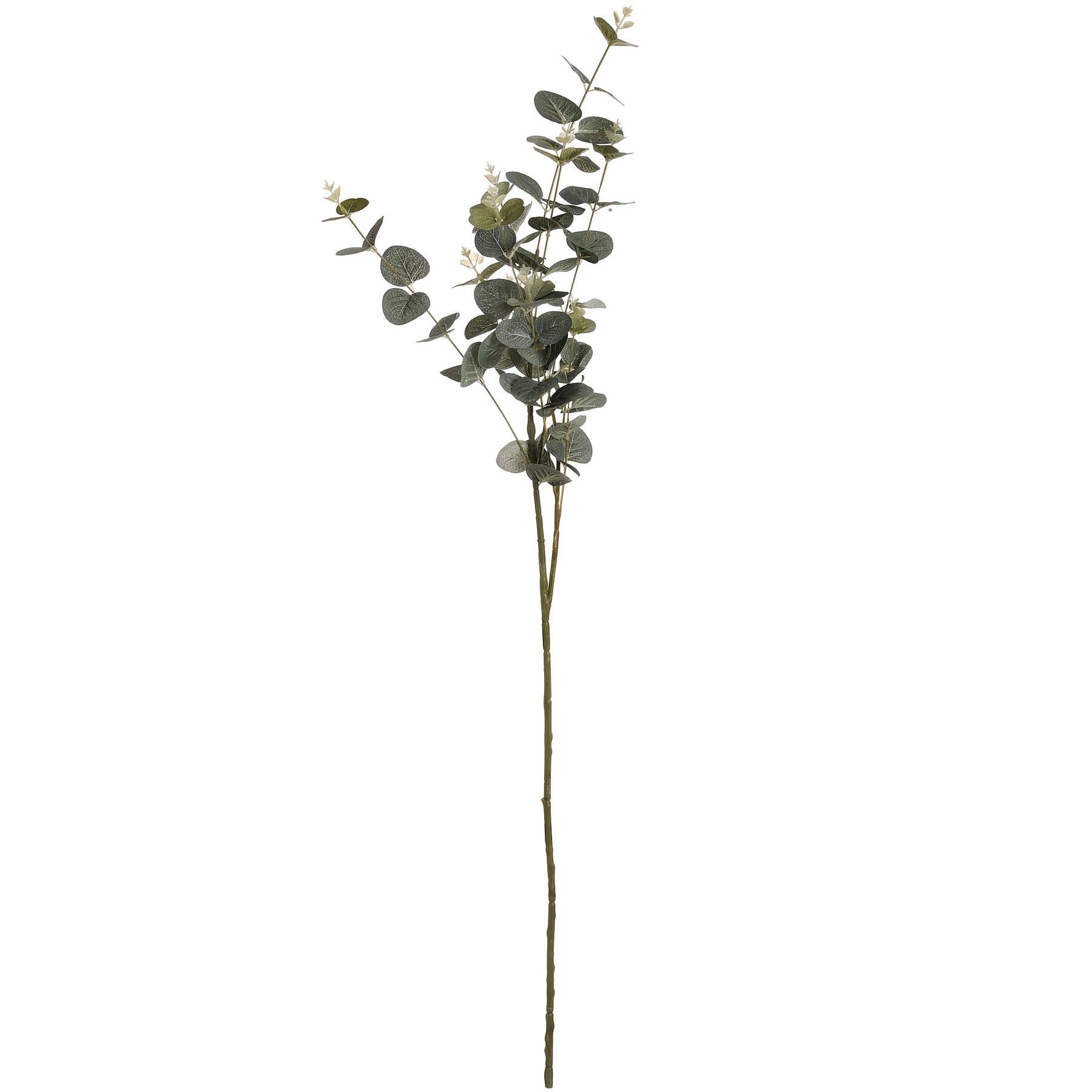 Eucalyptus Spray - Image 6