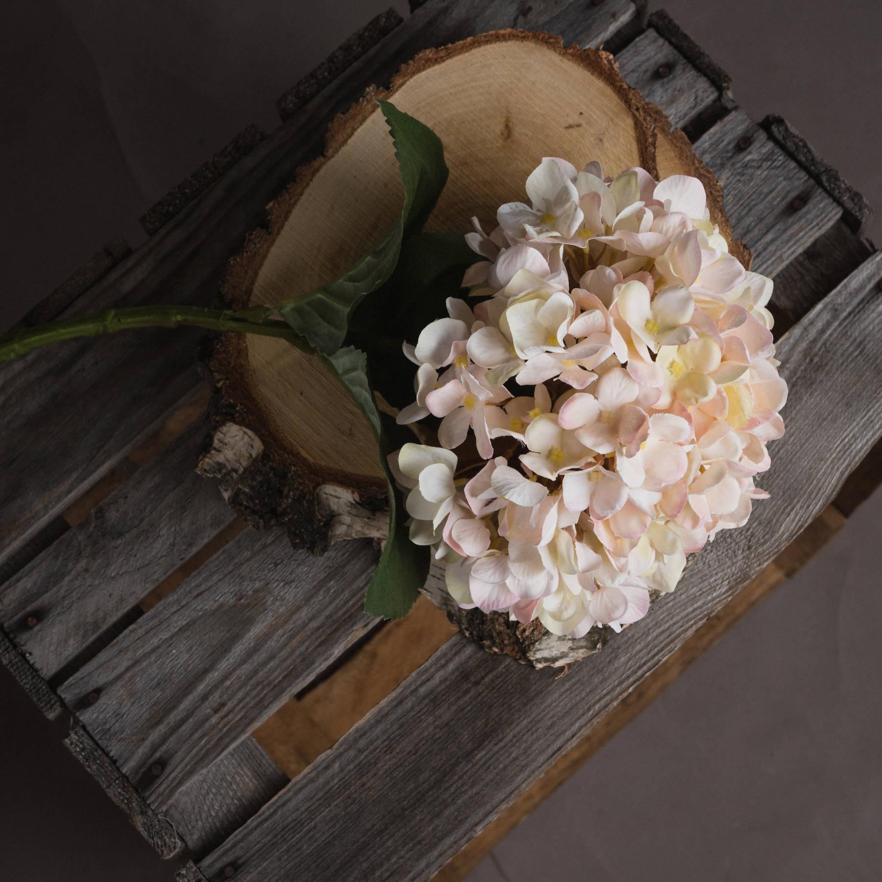 Autumn White Hydrangea - Image 2