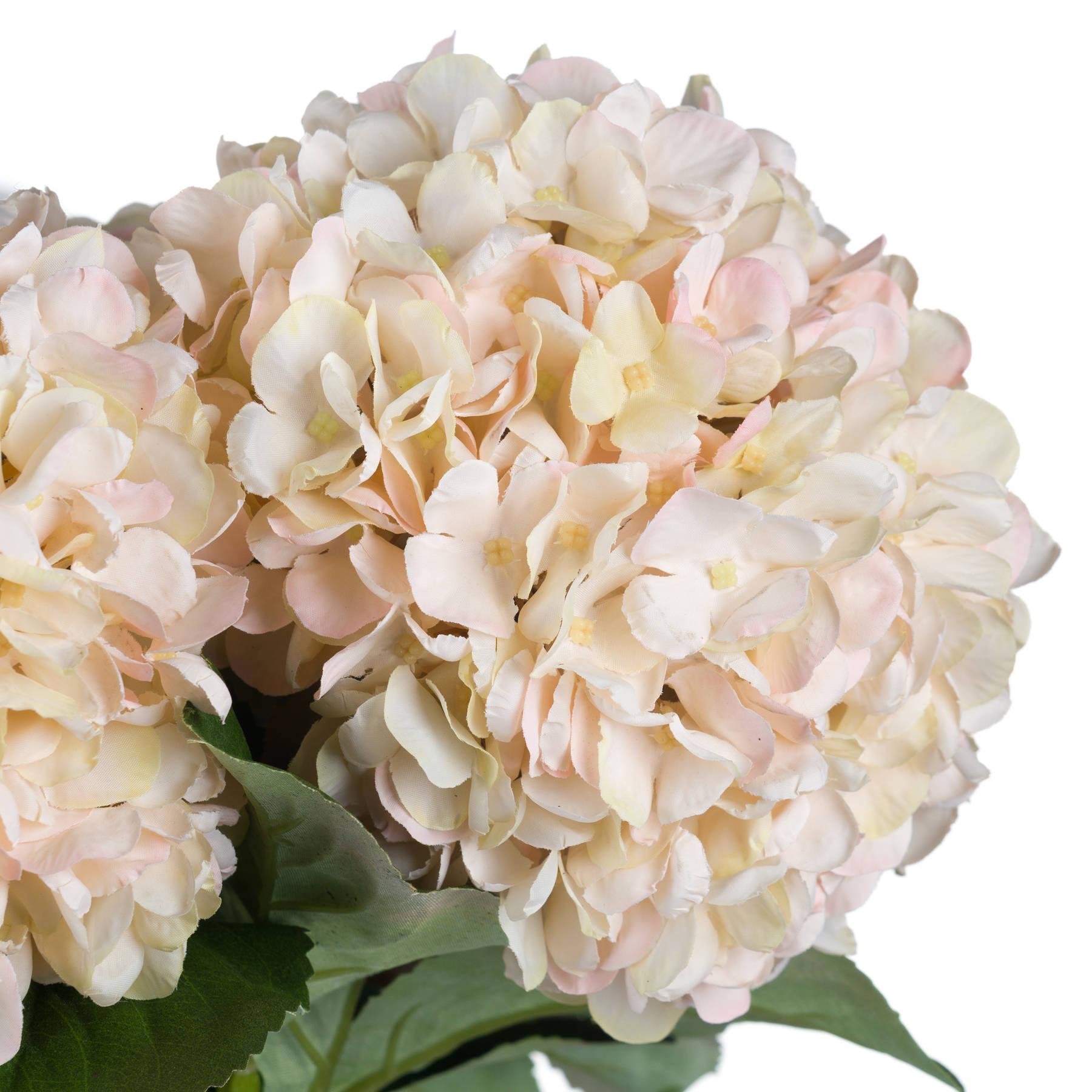 Autumn White Hydrangea - Image 5