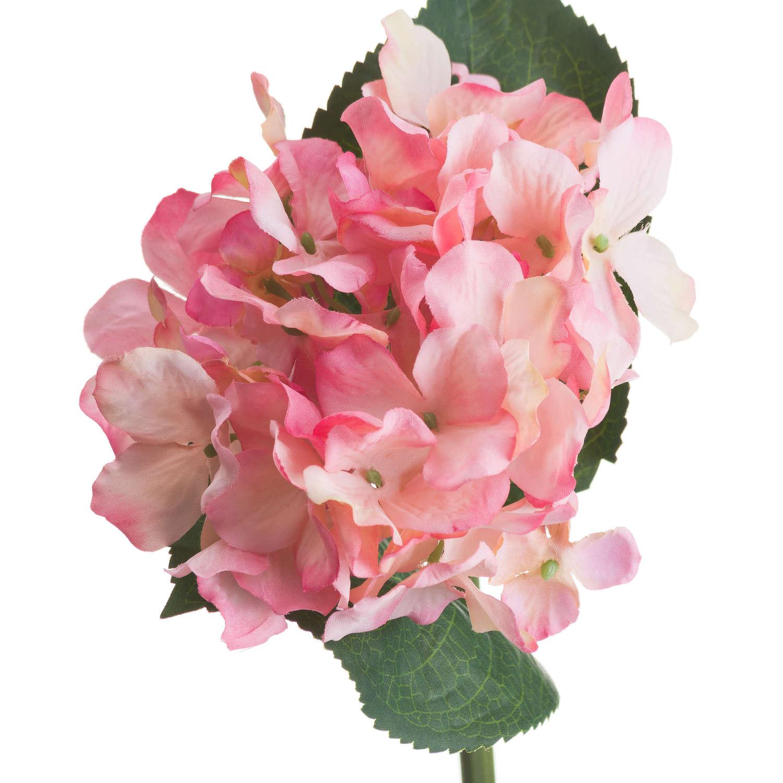 Pink Posy Hydrangea - Image 4