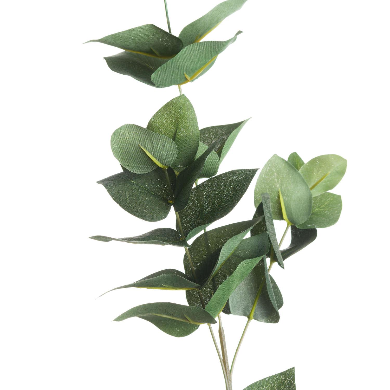 Eucalyptus Filler - Image 2
