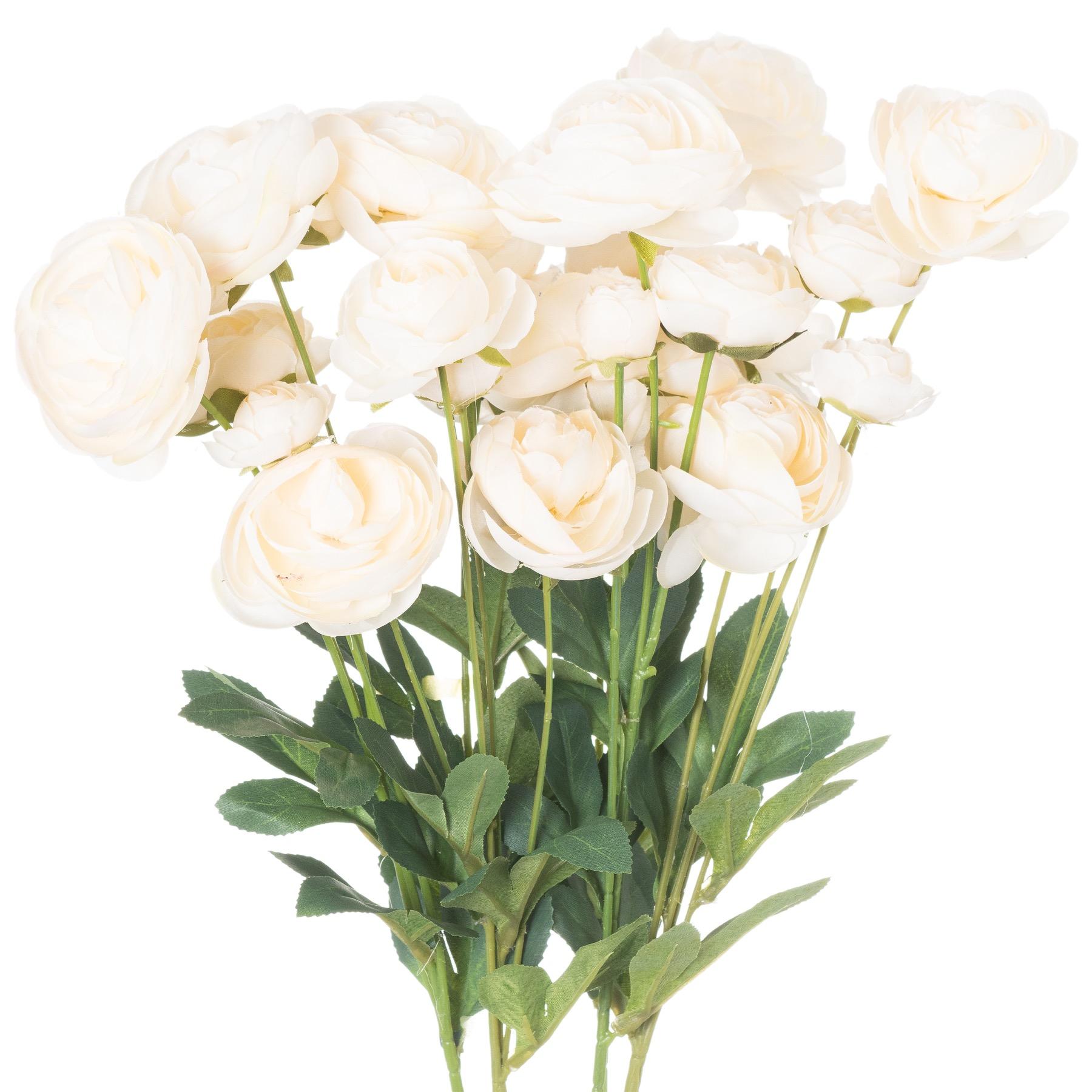 Cream Ranunculus - Image 1