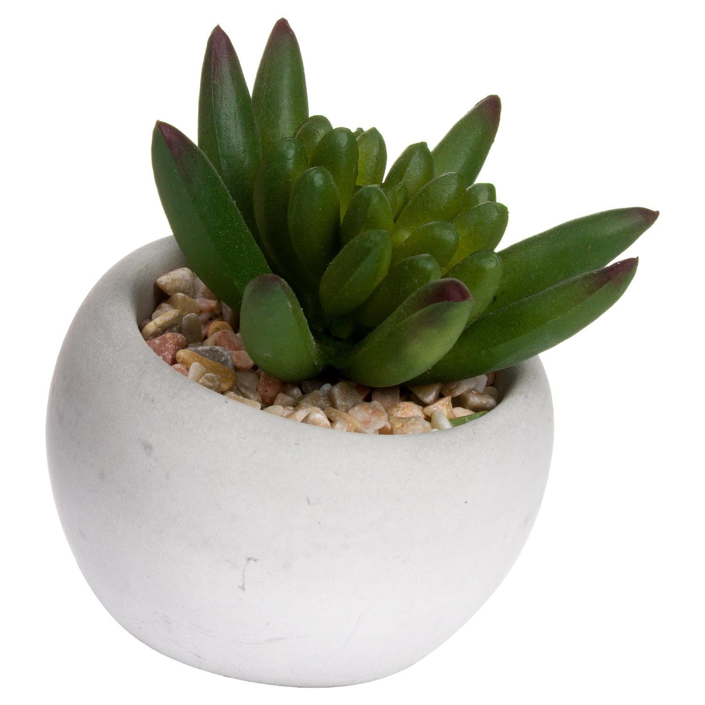 Miniature Little Jewel Succulent In Cement Pot - Image 1