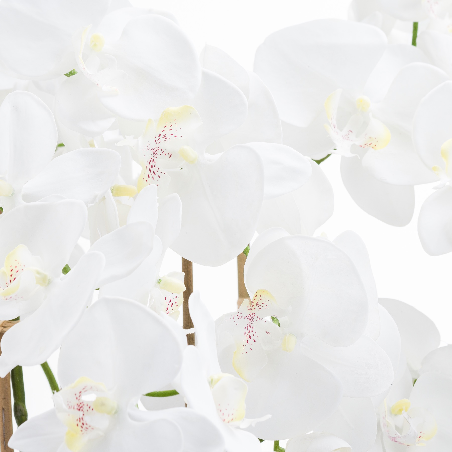 Large White Tall Orchid In Glass Pot - Image 2