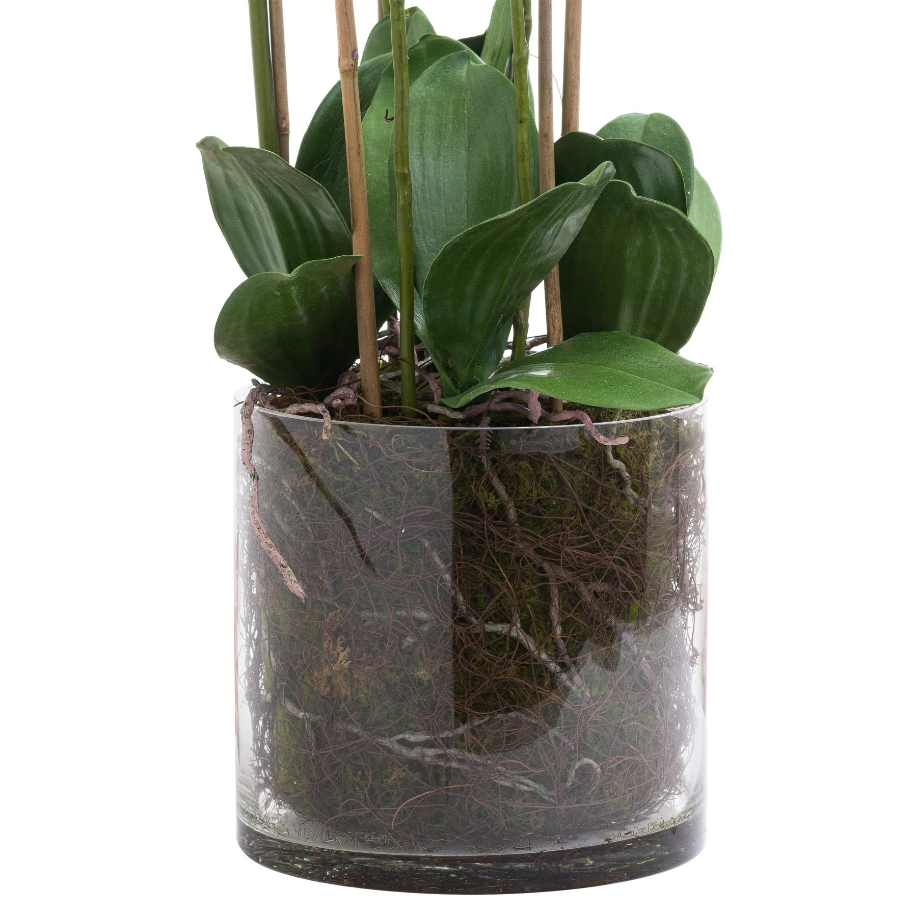 Large White Tall Orchid In Glass Pot - Image 3