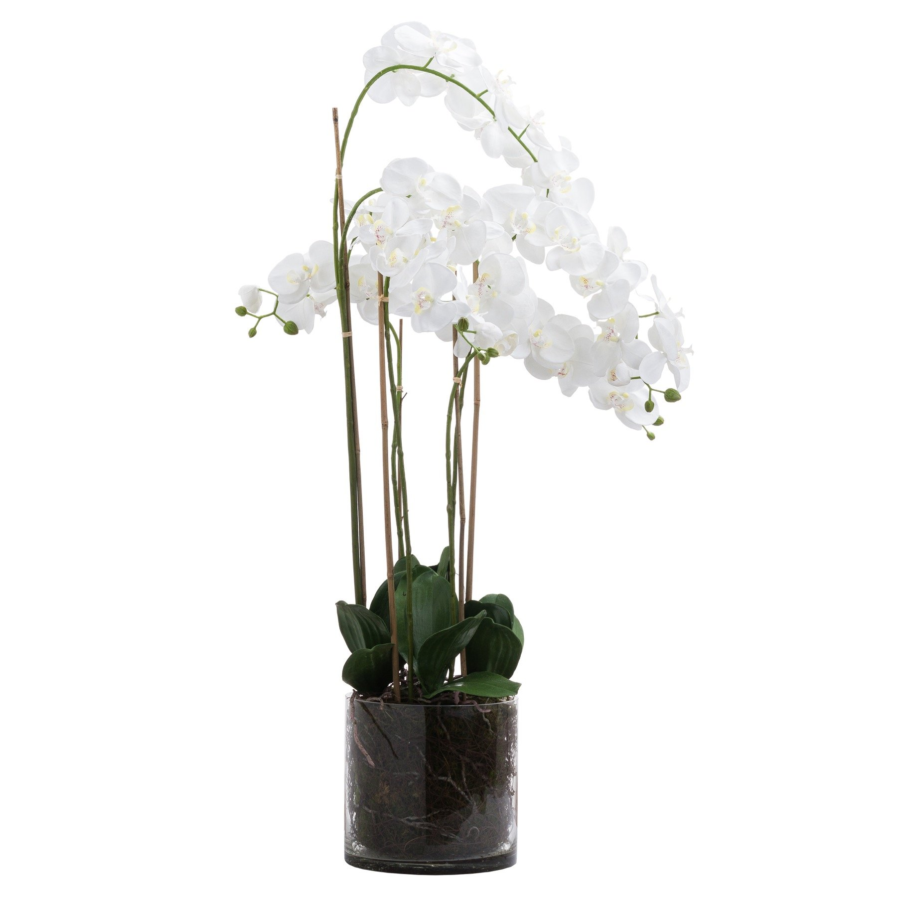 Large White Tall Orchid In Glass Pot - Image 1