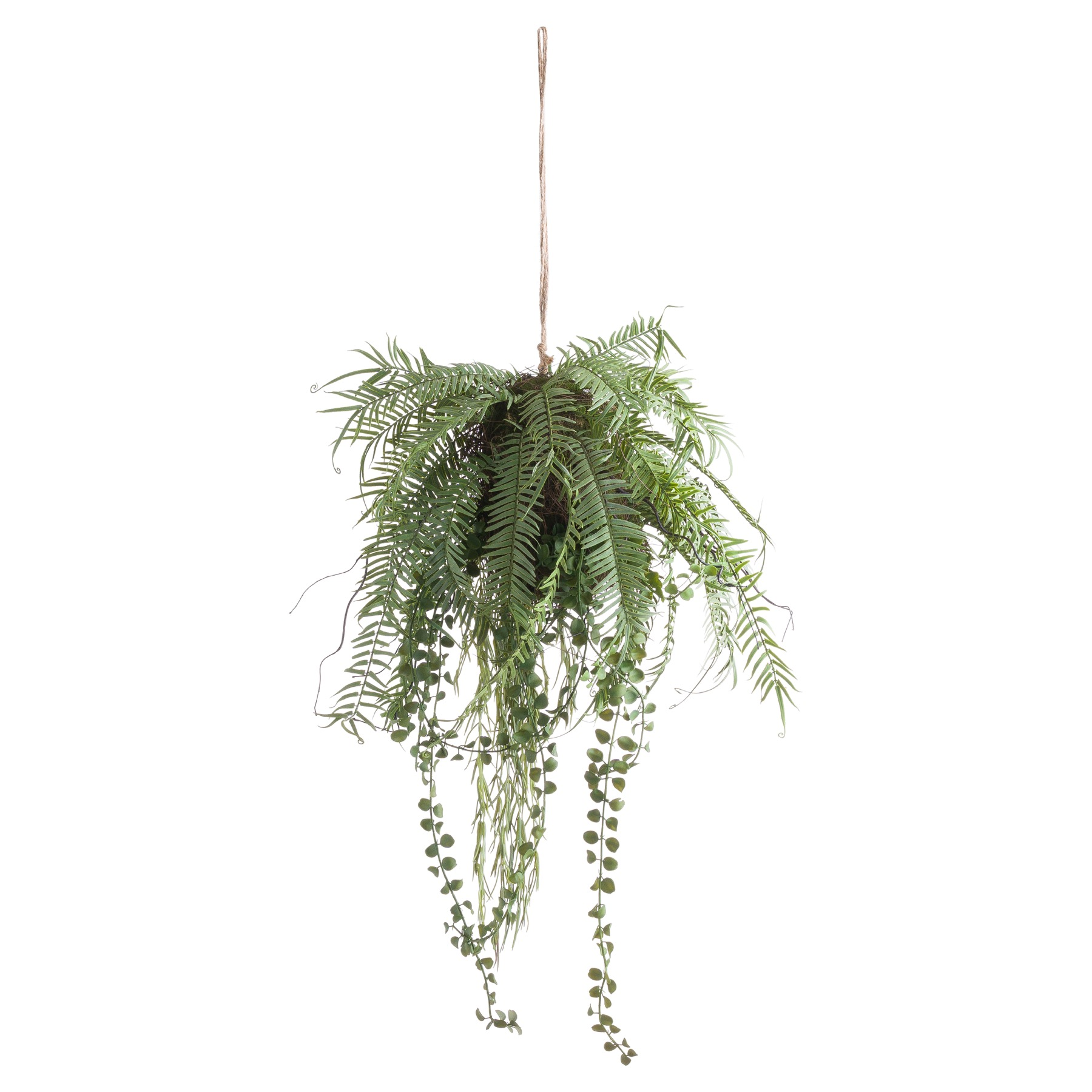 Fern Hanging Basket Arrangement - Image 1