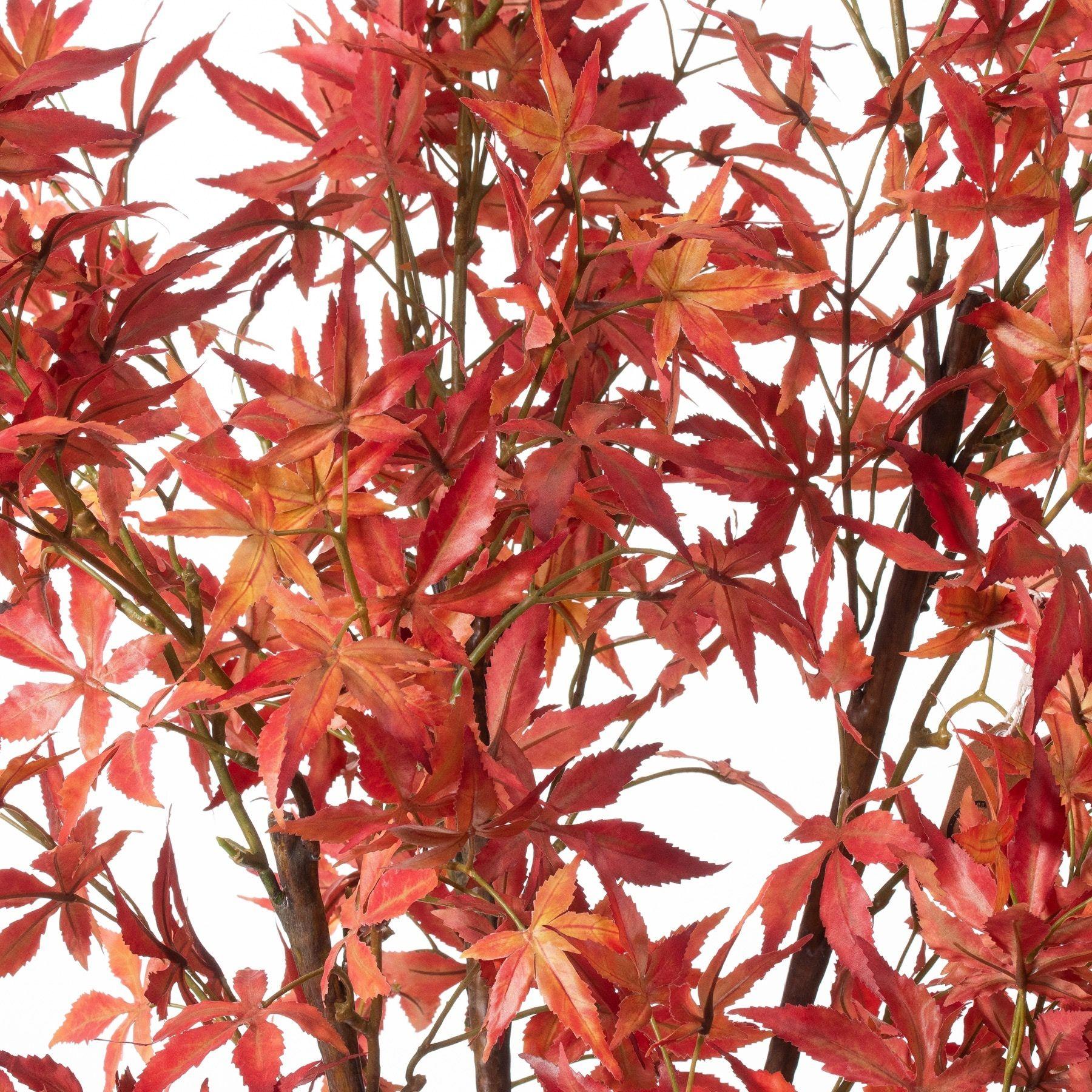 Large Acer Tree - Image 2