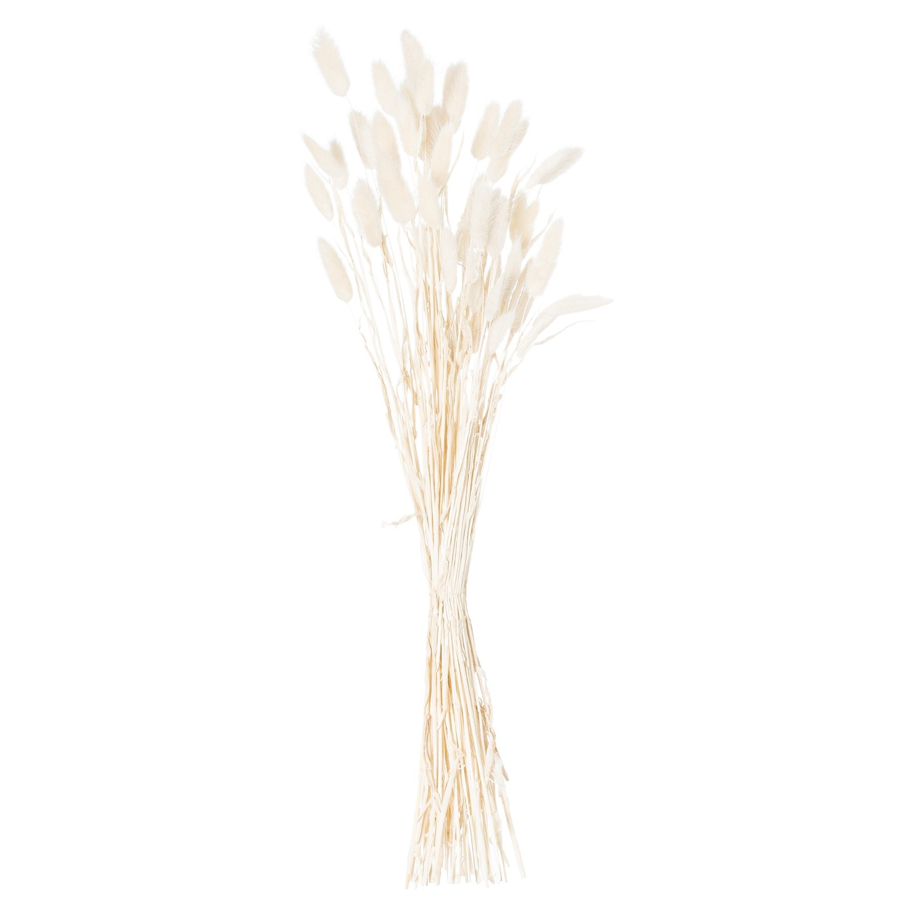 Dried White Bunny Tail Bunch Of 60 - Image 2
