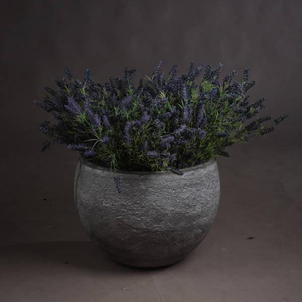 Large Lavender Bush