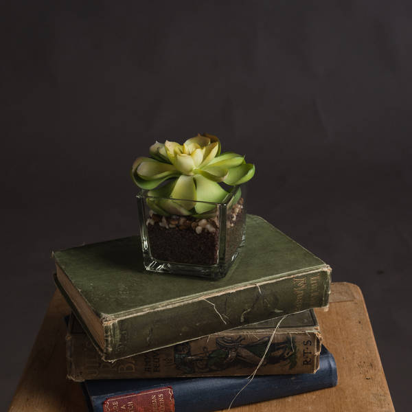 Miniature Succulent in Glass Pot