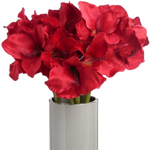 Red Amaryllis Stem