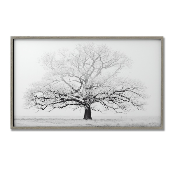 Solitary Tree Glass Image with Silver Frame
