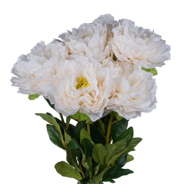 White Peony Garden Rose