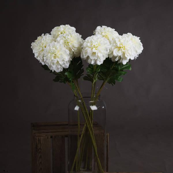White Pom Dahlia