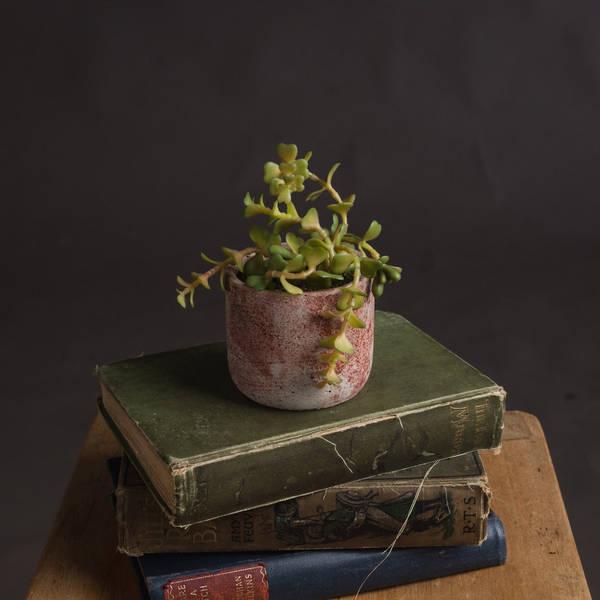 Miniature Potted Succulent