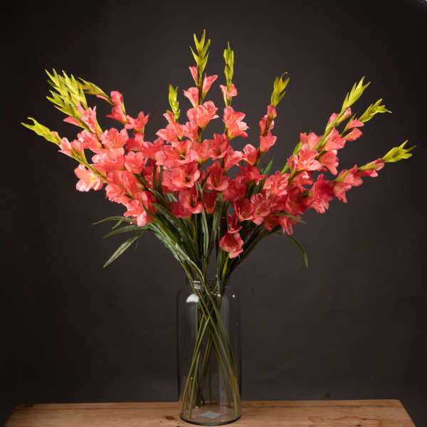 Coral Gladioli