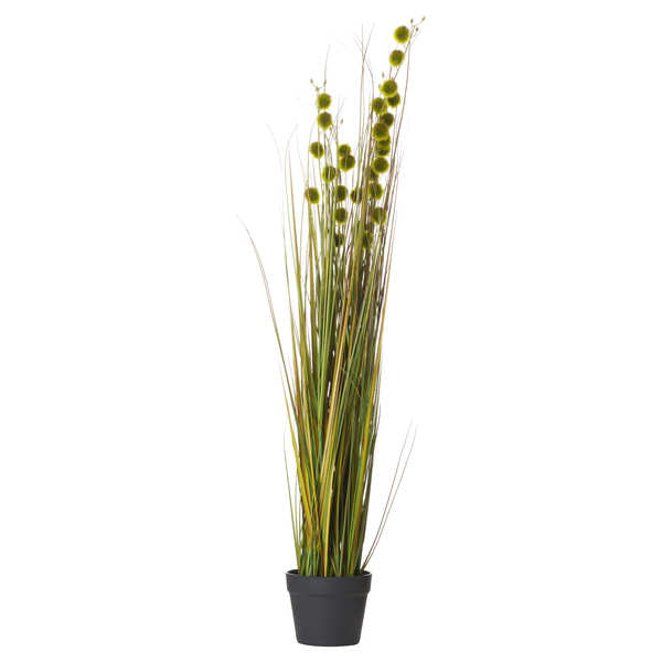 Tall Seed Grass Pot