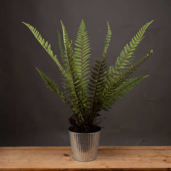 Tall Potted Fern