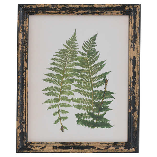 Rustic Framed Botanical Ferns Picture