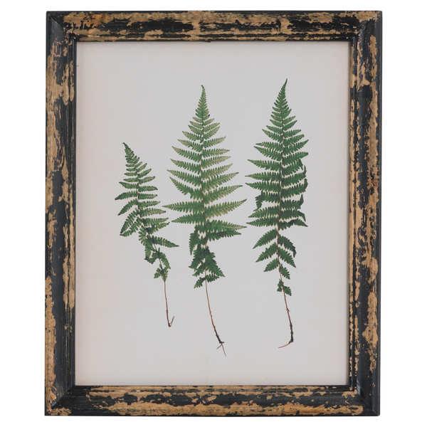 Rustic Framed Botanical Triple Fern Picture