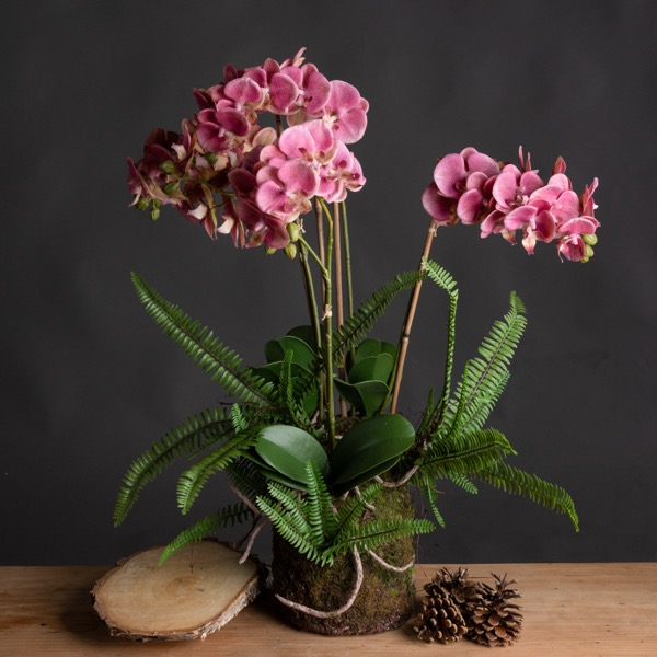 Large Pink Orchid And Fern Garden In Rootball