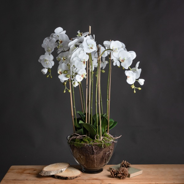 Large White Orchid In Glass Pot