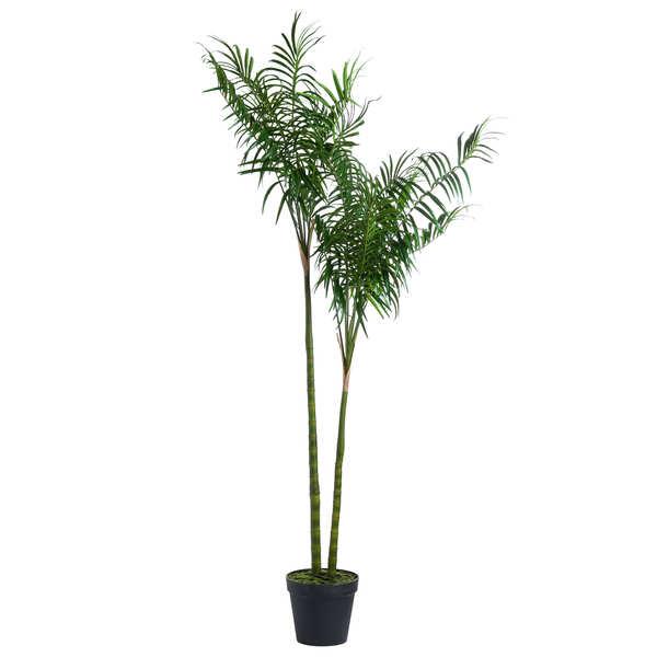 Large Parlour Palm Tree