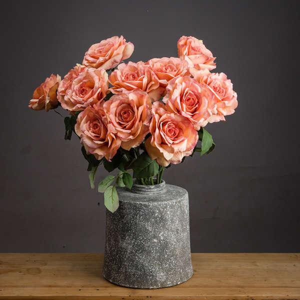 Autumn Peach Silk Garden Rose