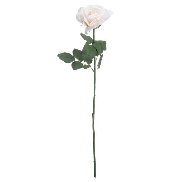 White Silk Garden Rose