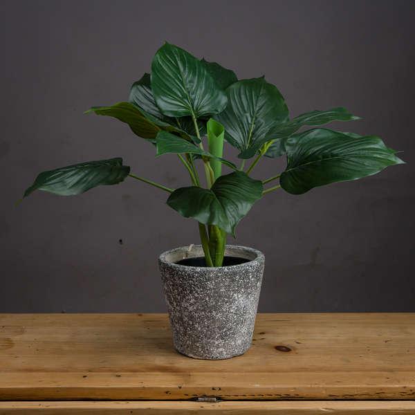 Faux Scindapus Plant
