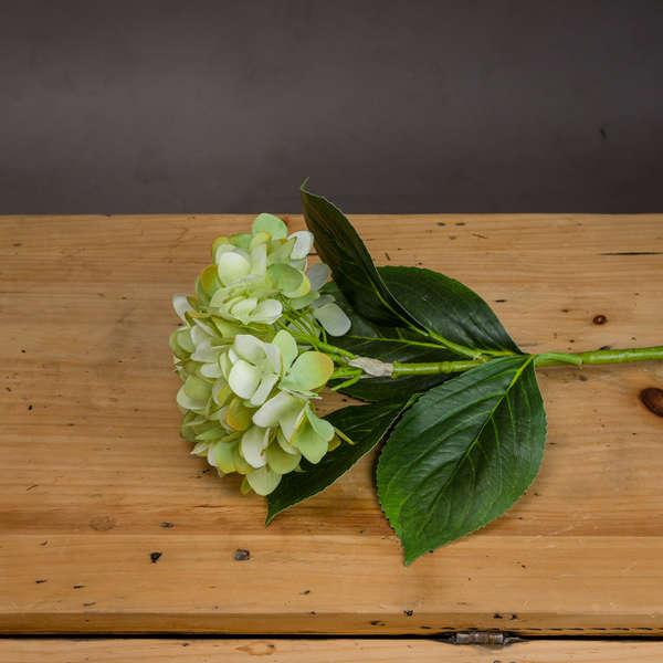 Light Green Classic Hydrangea