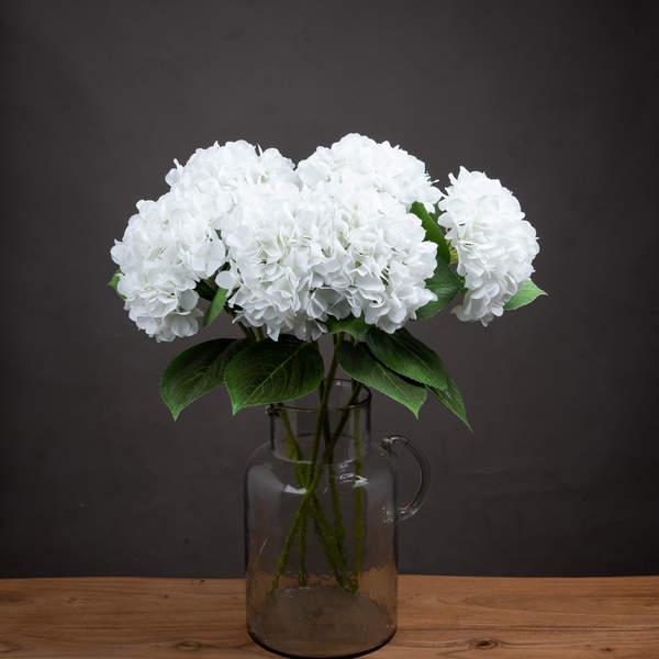 White Classic Hydrangea