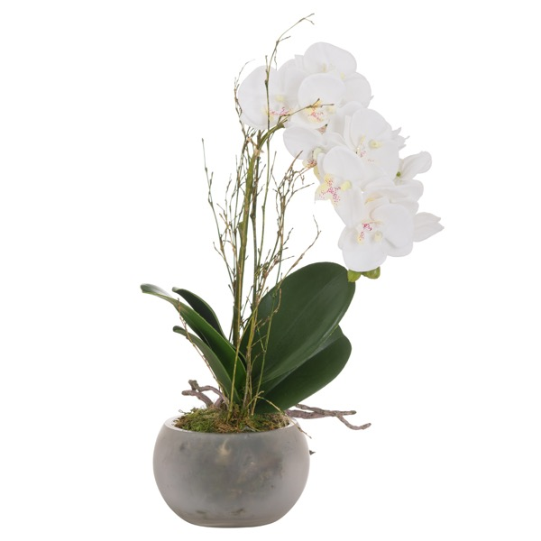 Small Stone Potted Orchid With Roots