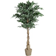 4ft  Green  Mini  Ficus  Tree