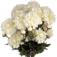 White Autumn Chrysanthemum