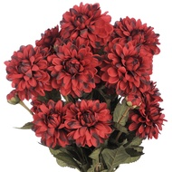 Red  Autumn  Chrysanthemum