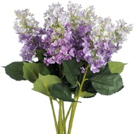 Single Hydrangea Purple